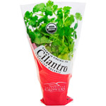Potted Cilantro