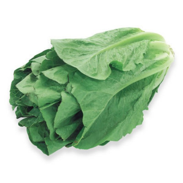 Fresh Sleeved Romaine Lettuce