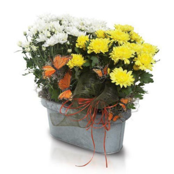 Floral Butterflies & Blooms Planter