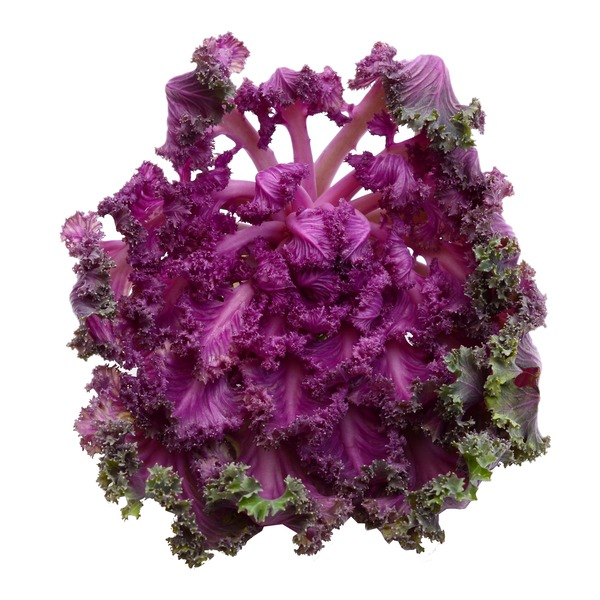 Vegetables Produce Organic Purple Kale