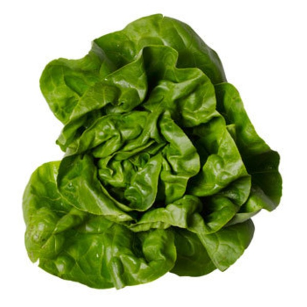Veg Lettuce Local Living Butter Lettuce