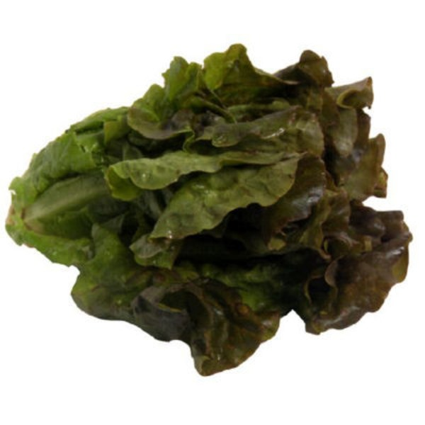Organic Red Leaf Lettuce
