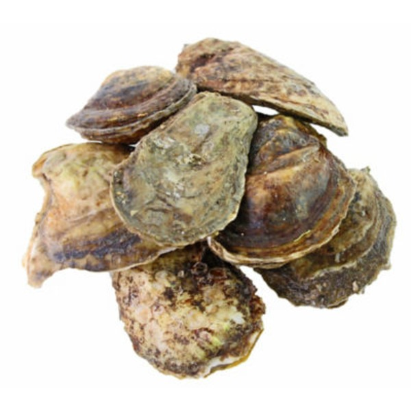 Connecticut Blue Point Oysters