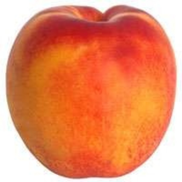 Large Yellow Flesh Nectarine