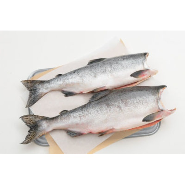 Fish Market Whole Alaska Pink Salmon