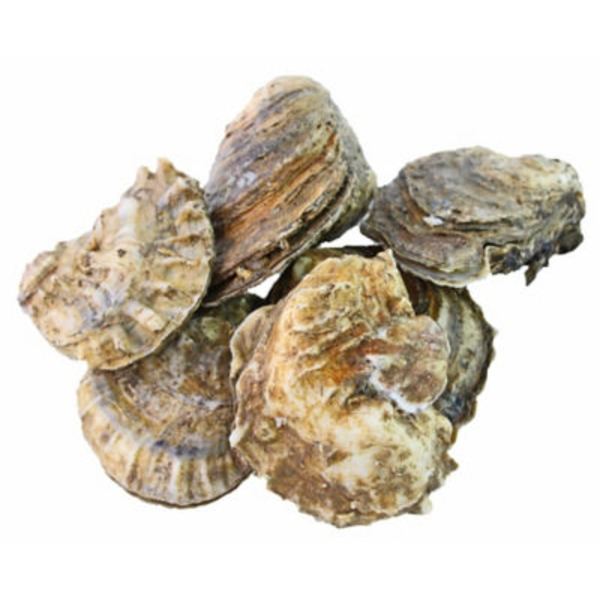 Fresh Gulf Oysters In Shell