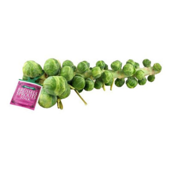 Fresh Brussels Sprouts Stalk