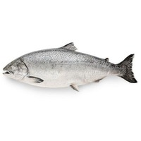 Fish Market Whole Coho Salmon