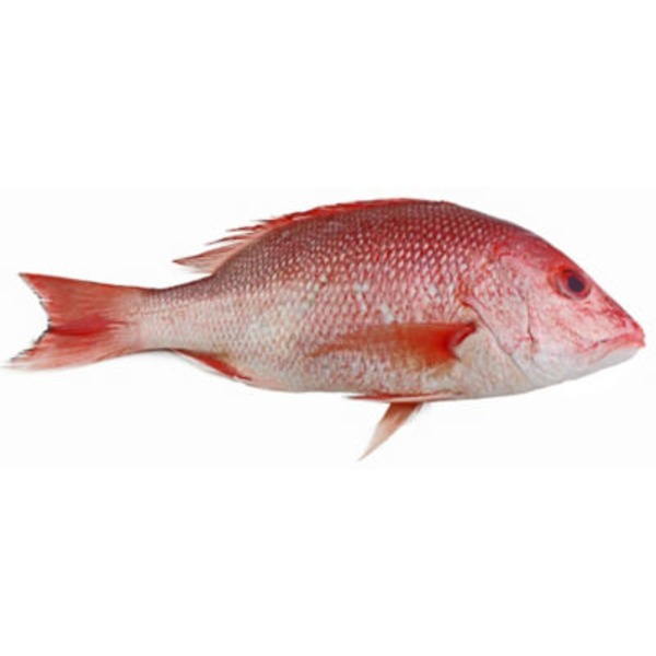 Whole American Red Snapper