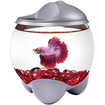 Aqua Cultur  0.7-Gallon Betta Bubble with LED Hood
