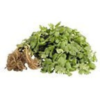 Organic Italian Parsley Bunch