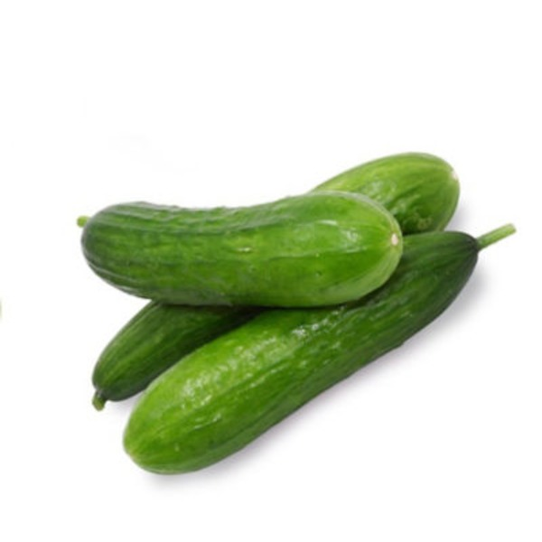 Persian (Armenian) Cucumber