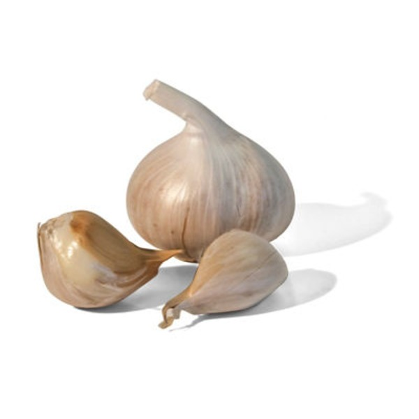 Auerpak Elephant Garlic