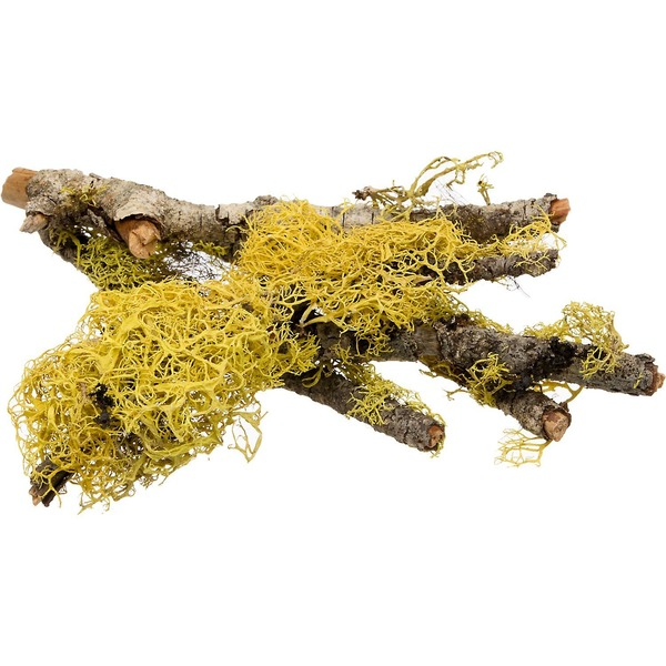 T-Rex Terra Accents Lichen Sticks for Terrariums