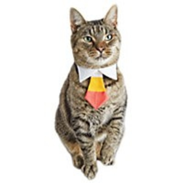 Halloween Cat Candy Corn Tie