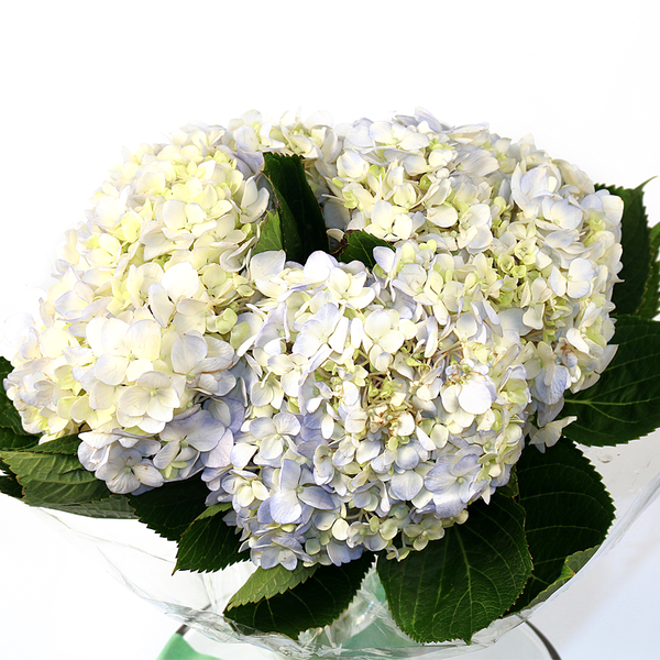 Local Hydrangea 3 Stems