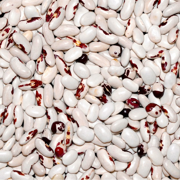 Laurel Hill European Soldier Beans