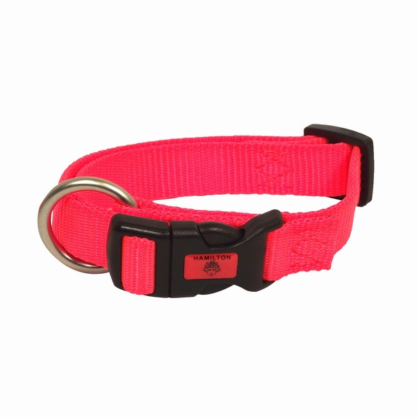Hamilton Adjustable Nylon Dog Collar In Orange