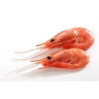 Pacific Cold Water Shrimp