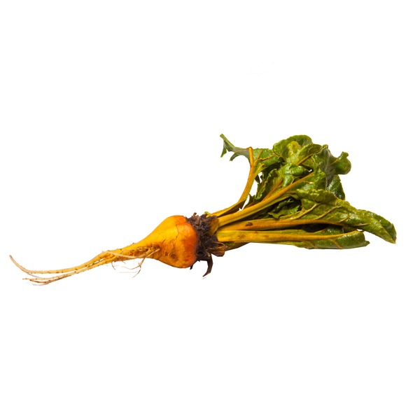 Organic Gold Beet Bunch