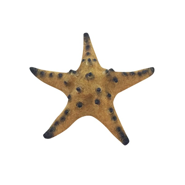 Petco Imagitarium Starfish