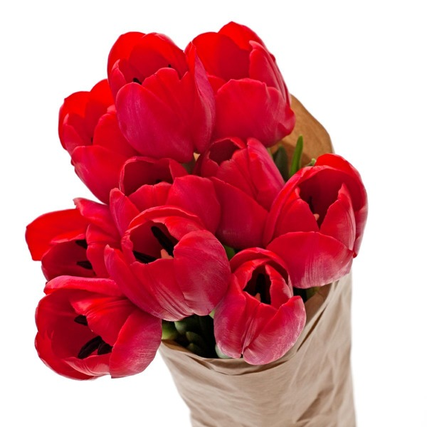 Cut Tulips (Choose Color)