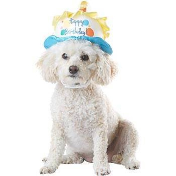 Petco Special Occasions Birthday Dog Hat, Medium/Large