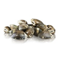 Fresh Farmed Live Manila Clams