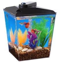 Aqua Culture 1 Gallon Aquarium Kit with LED Lighting & Filtration, 7.5'L x 7.5'W x 10.25'H