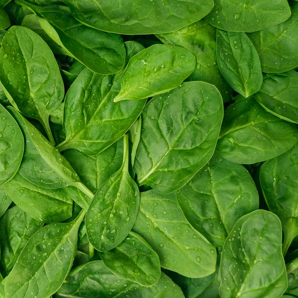Organic Loose Baby Spinach