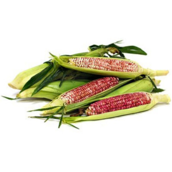 Fresh Red Sweet Corn