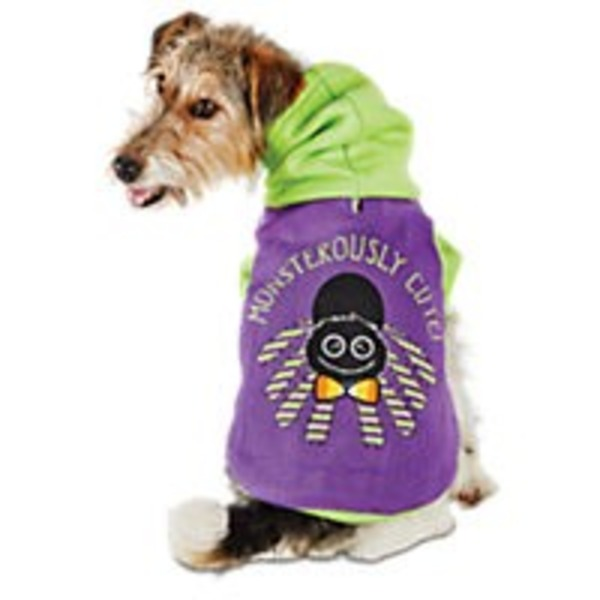 Medium Halloween Lite Up Spider Hoodie Kong
