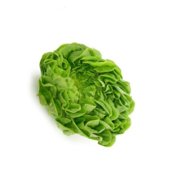 Pure Flavor Living Green Boston Lettuce