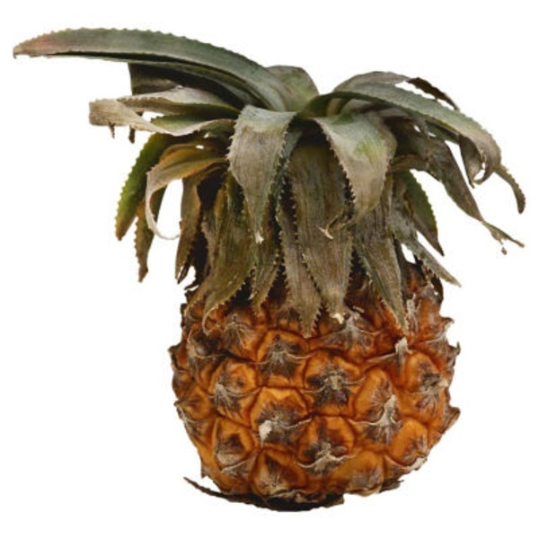Fresh Baby Pineapple