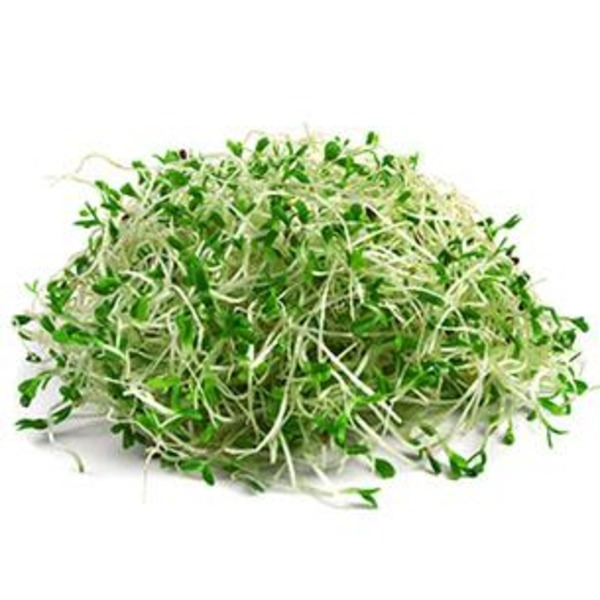 New World Alfalfa Sprouts