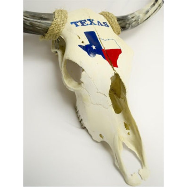Blue Orange Pottery Texas Hand Painted Longhorn Skull