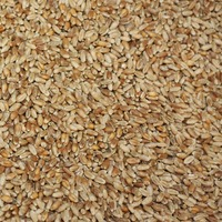 Golden Prairie Hard Red Wheat Berries