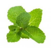Fresh Mint, Bunch