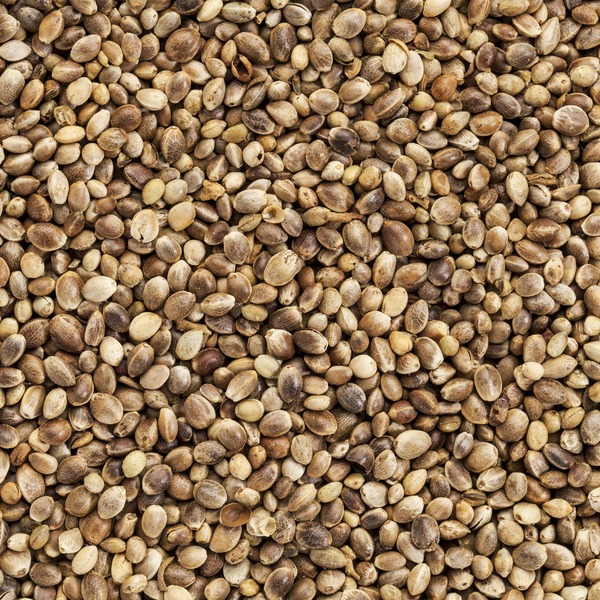 Farmers Direct Coop Organic Hemp Seeds, Bulk