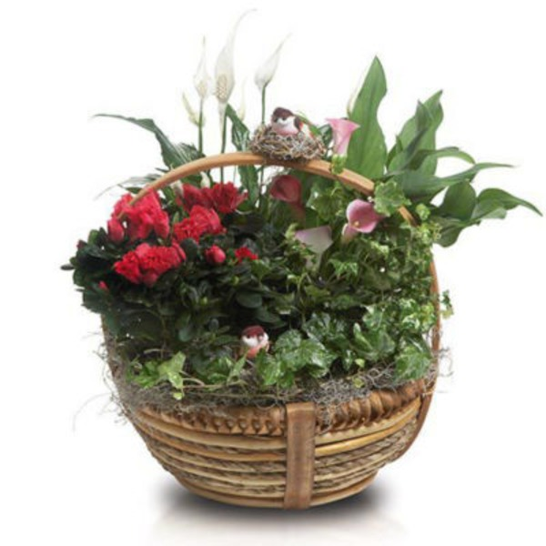 Floral Feather Your Nest Premium Planter