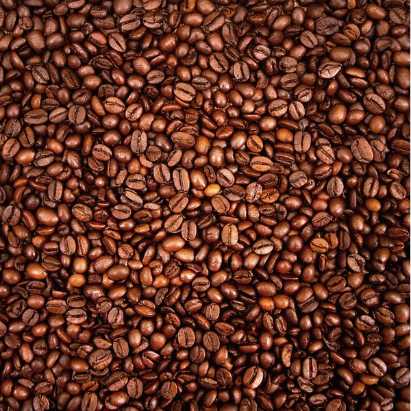 Katz Coffee Medium Roast Coffee Beans