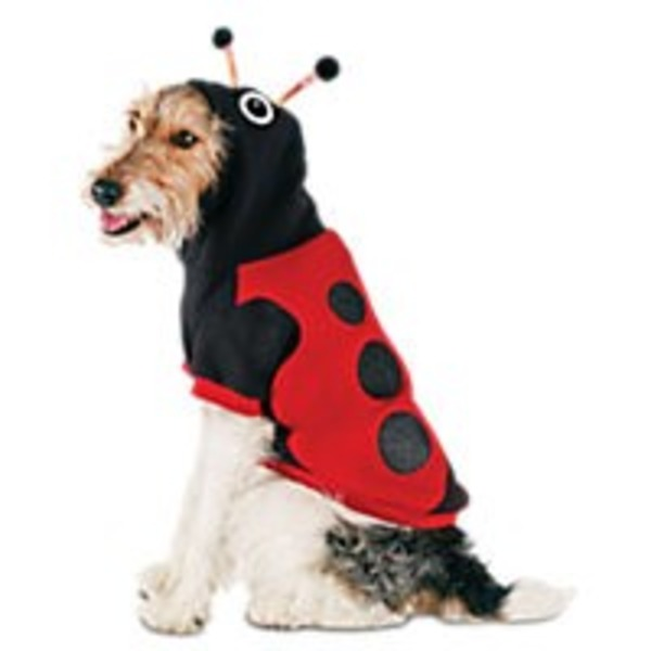 Extra-Extra-Small Halloween Lady Bug Hoodie
