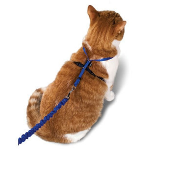 Pet Safe Gentle Leader Come With Me Kitty Harness & Bungee Leash In Red Large