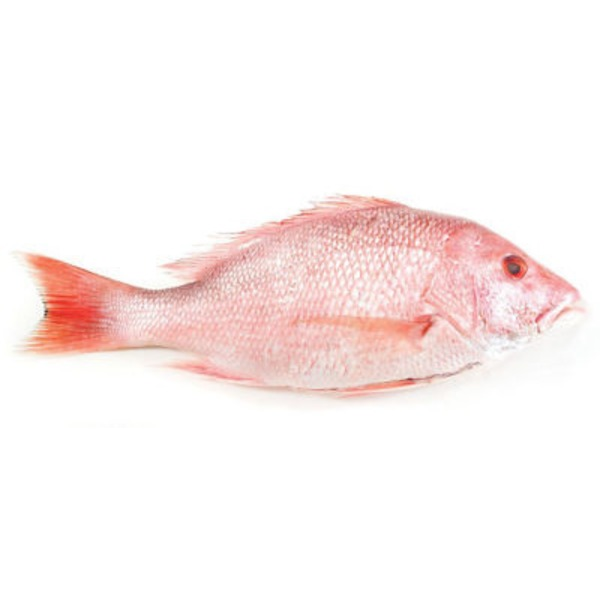 Fish Market Whole Large American Red Snapper