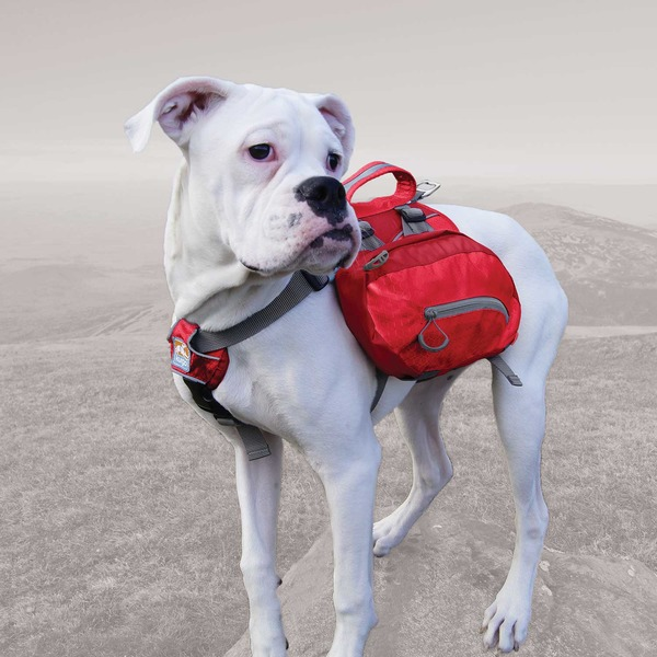 Kurgo Medium Baxter Pack Red