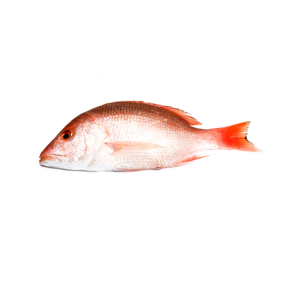 Seafood Red Snapper