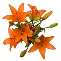 Lilies, 3 Stems (color may vary)
