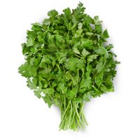 Cilantro, bunch