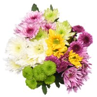 Rainbow Poms, 7 Stems