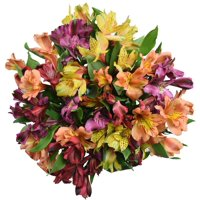 Alstroemeria, 14 Stems (colors may vary)